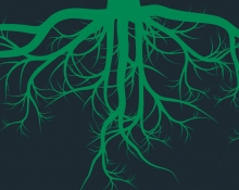 Saneeraus- kasvit